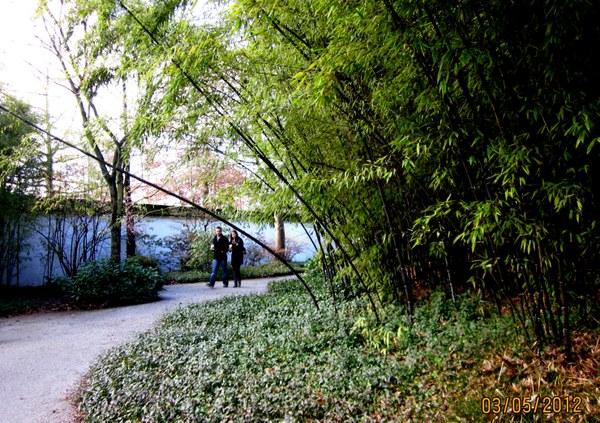Spring -早春竹林散步享受清靜環境。