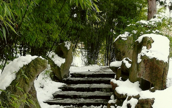 Winter—冬天下雪