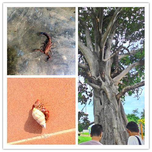 Tree in tree